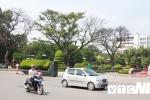 Anh: Can canh nhung cay muong tram tuoi bong dung chet kho ben tuong dai Nu tuong Le Chan o Hai Phong hinh anh 2