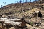 Để mất rừng tự nhiên, hạt trưởng kiểm lâm cùng nhiều cán bộ bị kỷ luật
