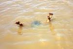 5 nam sinh chết đuối khi đi câu cá ở Hà Nội