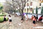 Anh: Con duong la vang ruc ro giua long Ha Noi hut hang nghin ban tre hinh anh 4