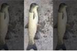 Sinh vật lạ 'thân cá, đầu chim' như photoshop gây xôn xao