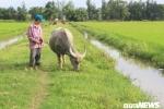 Chuyện lạ đời ở Quảng Bình: Chăn thả trâu bò phải đóng phí