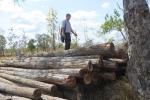 Thủ tướng giao UBND tỉnh Đắk Lắk kiểm điểm trách nhiệm vì làm mất rừng