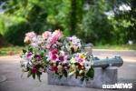 Súng và hoa ở đảo Sentosa