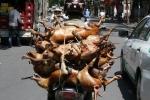 Ăn thịt chó: Sướng mồm hại thân, rước bệnh vào người