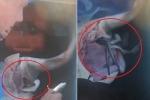 Clip: Ngư dân rạch bụng cá mập mẹ đã chết, cứu 98 cá mập con
