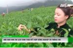 Độc đáo khu du lịch sinh thái kết hợp nông nghiệp và trồng chè