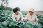 Thổn thức trước bộ ảnh đôi vợ chồng nông dân bên vườn bắp cải đẹp nao lòng