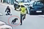 Chó hoang lao vào cắn xé tên cướp, giải cứu cô gái giữa phố