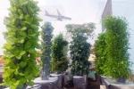 Vợ có bầu, chồng tự chế vườn rau sạch xanh mướt trên sân thượng
