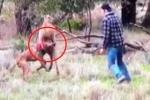 Clip chủ giao chiến với kangaroo, giải cứu chó nhà hút triệu views trên Facebook