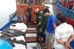 Tàu cá Quảng Ngãi bị tàu Trung Quốc đâm chìm ở Hoàng Sa: Các ngư dân gặp nạn giờ ra sao?