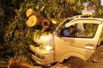 TP.HCM: Cây cổ thụ đè bẹp ô tô trong cơn giông