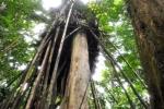 Clip: Trong căn chòi vắt vẻo của 'người rừng' có gì?