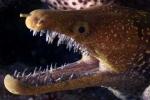 Ảnh: Bộ hàm đáng sợ của loài 'quỷ biển'