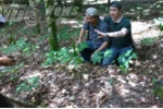 Sửng sốt phát hiện quần thể sâm khổng lồ trên đỉnh Ngọc Linh