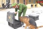 Xem 'chiến binh 4 chân' của công an Thủ đô hít vali tìm thuốc nổ