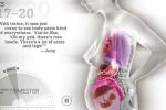 Video: 25 giây miêu tả quá trình mang thai và sự phát triển của bé trong bụng mẹ
