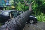 Cây đổ la liệt trong bão số 1, hàng loạt ôtô bị đè bẹp trên phố Hà Nội