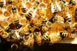 Làm chết 500.000 con ong, 2 bé trai đối diện án 10 năm tù