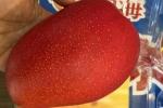 Xoài, dâu tây, nhót Nhật Bản giá cao ngất ngưởng vẫn không có để bán