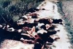 Ảnh: Ký ức đau thương thảm sát Mỹ Lai cách đây 50 năm