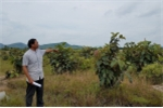 Bắt 3 cán bộ địa chính nhờ dân đứng tên để nhận tiền bồi thường ở Đắk Lắk