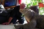 Video: Người đàn ông nuôi cá sấu, rắn chuông, nhện độc trong nhà như thú cưng