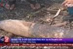 Clip: Quả đạn pháo dài 1m rơi xuống vườn nhà dân ở Quảng Trị