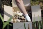 Nga: Kinh hoàng phát hiện 248 hài nhi trong thùng giấy