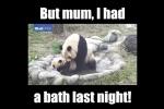 Phì cười clip gấu trúc mẹ bắt con đi tắm