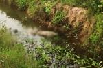 Thi thể người đàn ông phân hủy tại mương nước ở Đồng Nai