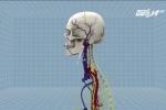Trung Quốc không cho phép thực hiện phẫu thuật ghép đầu người