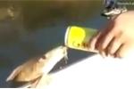 Clip: Cá ngoi lên mạn thuyền, ừng ực uống bia của cần thủ