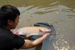 Đàn 'cá vua' mỗi con gần 40 năm tuổi ở Hà Giang