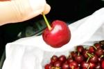 Tin vui: Cherry Úc sạch chính thức được vào Việt Nam