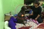 Clip: Chú chó lao ra đỡ đòn cho cô chủ khi bị mẹ đánh mắng