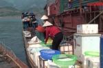 Mục sở thị chợ đầu mối trên núi với nhiều loại cá đặc sản
