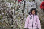 Dự báo thời tiết hôm nay ngày 31/1: Hà Nội rét 8°C, vùng núi cao có nơi dưới 3°C