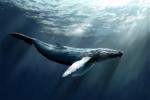 Loài động vật lớn nhất lịch sử săn mồi thế nào?