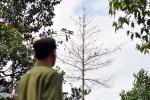 Hàng trăm cây gỗ bị đổ thuốc độc đến chết tại Đồng Nai: Xử lý nghiêm những người liên quan