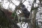 Video: Thanh niên tay không hái tảng mật ong 'khủng' thu về 5 lít mật