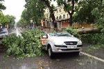 Bão số 1: Gió dữ dội quần thảo Hà Nội, cây đổ hàng loạt đè bẹp ôtô