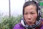 Người trồng hoa Lào Cai thiệt hại nặng sau mưa tuyết, rét hại kéo dài
