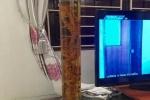 Sự thật củ tam thất cổ dài 1 mét, giá ngàn 'đô' từ Lai Châu về Hà Nội