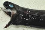 Sự thật về loài thủy quái có ngoại hình đáng sợ xuất hiện ở Đài Loan