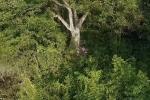 Điều phi thường 'Người rừng' đã làm khiến cả thế giới nể phục