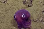 Quay được clip mực tím ngắt, mắt ngược dưới đáy biển