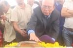 Cặp 'rắn thần' ở Quảng Bình dân đổ xô quỳ lạy là 2 con...rắn nước