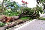 Áp thấp nhiệt đới giật cấp 8 hướng thẳng các tỉnh Bình Thuận đến Trà Vinh